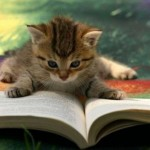 kittenoua-study-mode